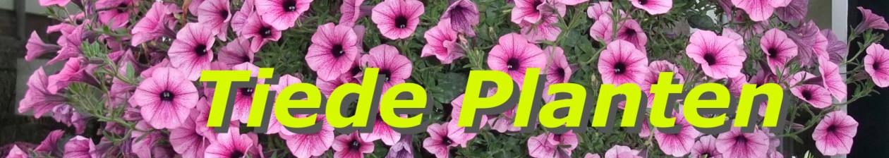 Tiede Planten